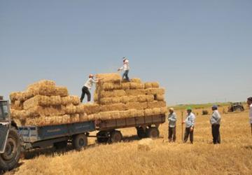 Türkiye tarihinde ilk kez saman ithal edecek